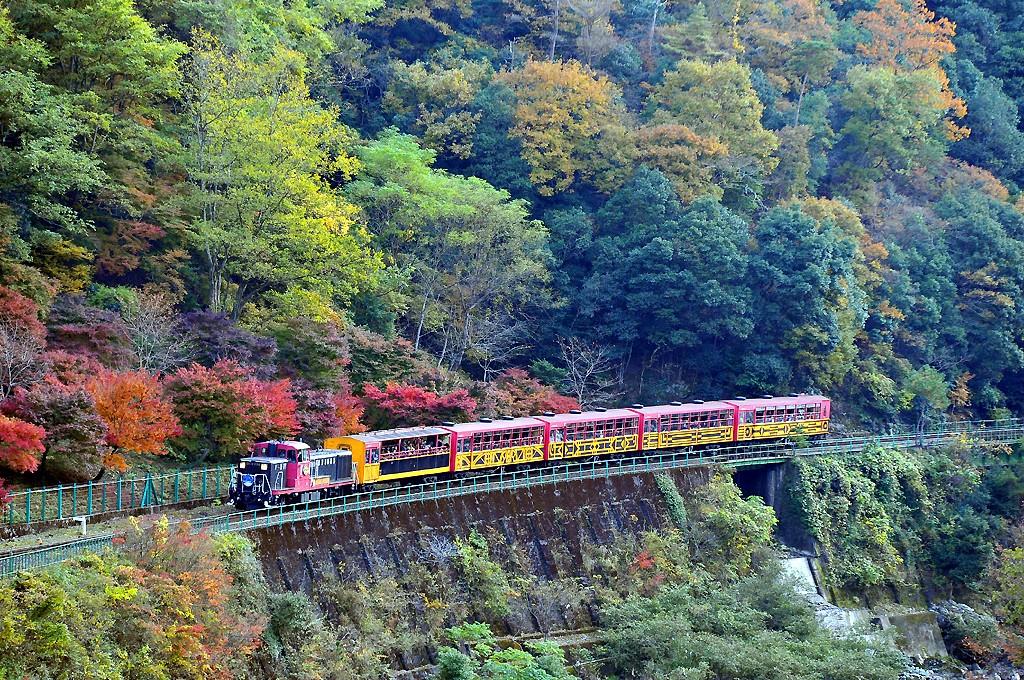 トロッコ列車景色