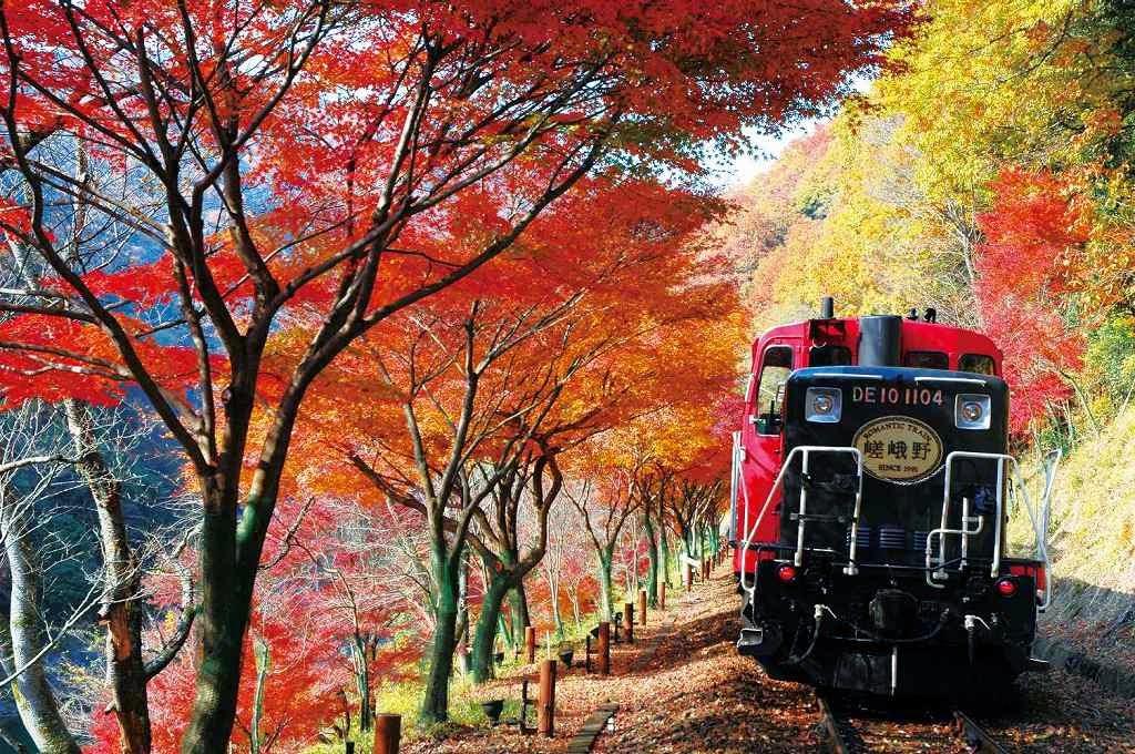 トロッコ列車の紅葉