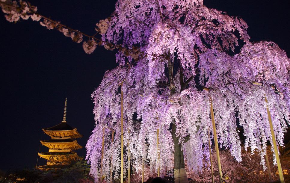 東寺夜間ライトアップ