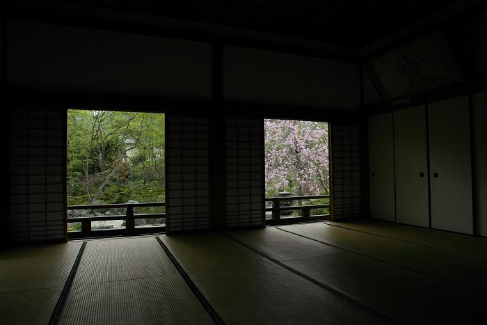 宝筐院の桜