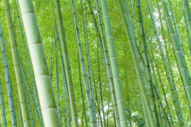 宝筐院の竹