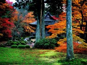 三千院紅葉