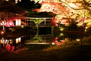 高台寺の桜ライトアップ