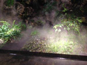 京都水族館・京の川