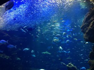 京都水族館・京の海