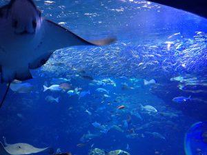 京の海大水槽